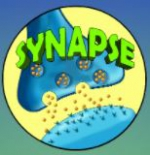 اپلیکیشن آموزش پزشکی سیناپس